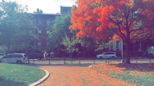 The foliage in D.C. is as beautiful as that on our campus. Photo by Kaley Chamberlain.