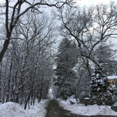 A look up Studio Road shows snow-covered trees.