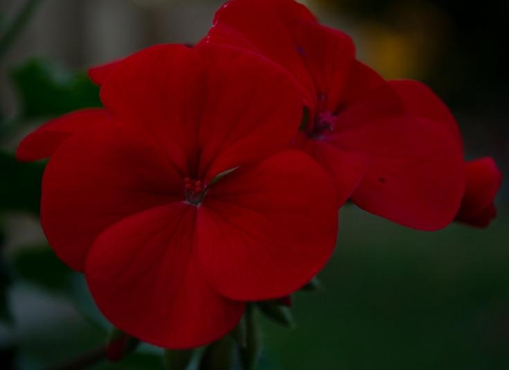 Bloom By Krista Roman